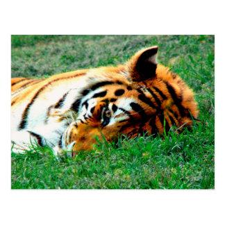 Tigre que encontra-se para baixo cartão