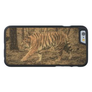 Tigre selvagem majestoso dos animais selvagens da