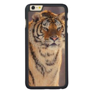 Tigre Siberian na neve, China Capa Para iPhone 6 Plus De Carvalho, Carved®
