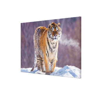 Tigre Siberian na neve, China Impressão Em Tela