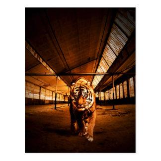 Tigre urbano cartão postal