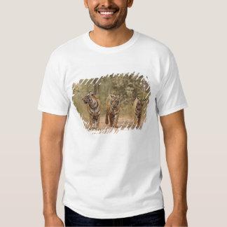 Tigres de Bengal reais na trilha, Ranthambhor Camisetas