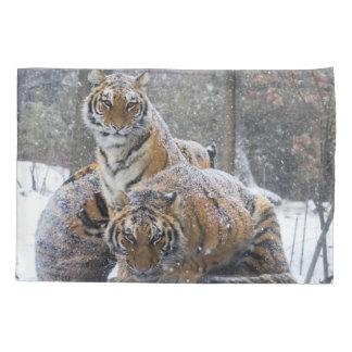 Tigres do inverno