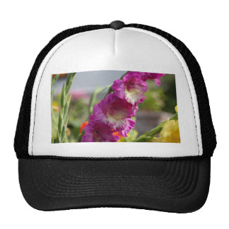 Tipo de flor do jardim (hortulanus do tipo de flor boné