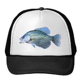 Tipo de peixe 2011 bonés