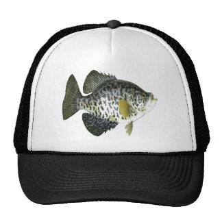 Tipo de peixe boné