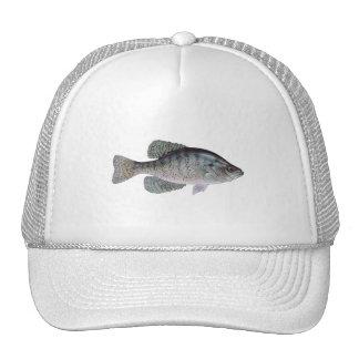 Tipo de peixe branco boné