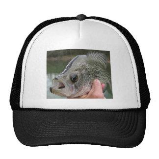 tipo de peixe do blacknose boné