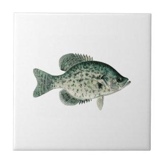 Tipo de peixe preto azulejo quadrado pequeno