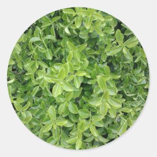Tipo verde etiqueta do arbusto da conversão da