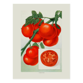 Tomates Cartão Postal