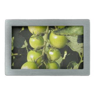 Tomates verdes que penduram na planta no jardim