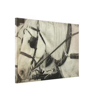 TOME um impressão das canvas da EXCURSÃO 24 x 16