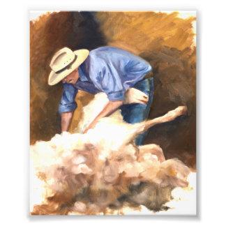 Tosquia de ovinos impressão de foto