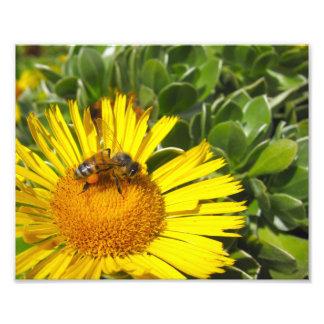 Trabalhador da abelha foto