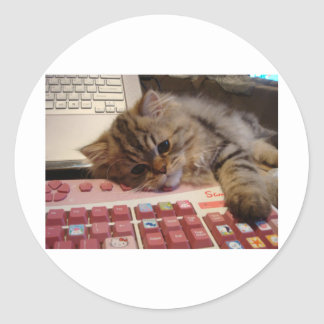 Trabalhará para um catnip adesivos em formato redondos