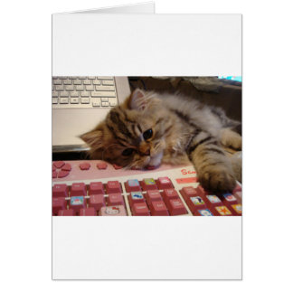 Trabalhará para um catnip cartao