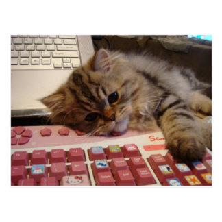 Trabalhará para um catnip cartao postal