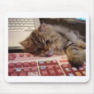 Trabalhará para um catnip mousepad