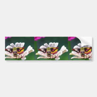 Traça de colibri adesivo para carro