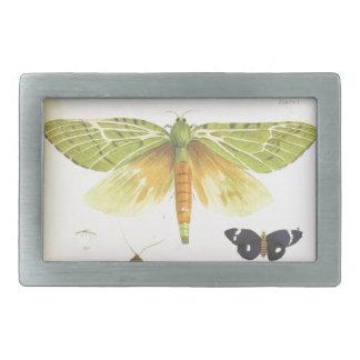 Traças e borboletas de Nova Zelândia