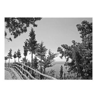 Trajeto na altura das árvores foto