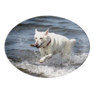 Travessa De Porcelana Alemão branco Shepard no lago George