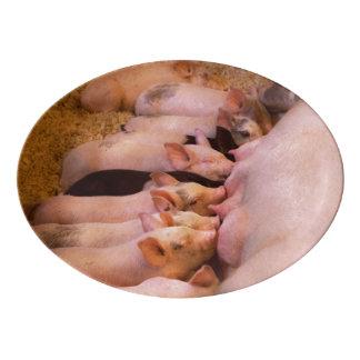 Travessa De Porcelana Animal - porco - comida do conforto