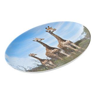 Travessa De Porcelana Família do girafa na cume gramínea
