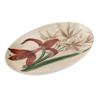 Travessa De Porcelana Flor vermelha e branca do Amaryllis