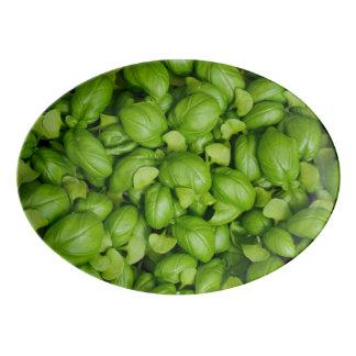 Travessa De Porcelana Folhas verdes da manjericão