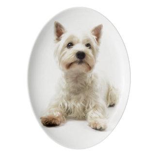 Travessa De Porcelana Montanhas ocidentais brancas adoráveis Terrier
