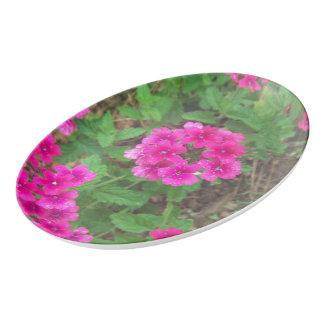 Travessa De Porcelana O verbena cor-de-rosa bonito floresce a foto