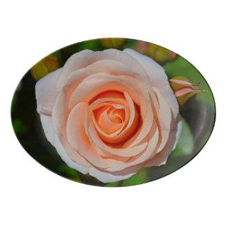 Travessa De Porcelana Único rosa do rosa