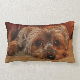 Travesseiro lombar do yorkshire terrier almofada lombar