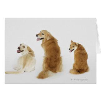 Três cães que olham a câmera cartao