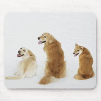 Três cães que olham a câmera mousepad