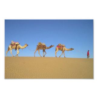 Três camelos no poster do deserto artes de fotos