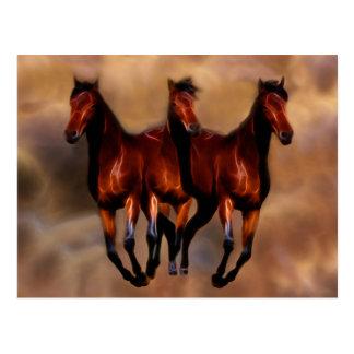 Três cavalos em um cartão postal