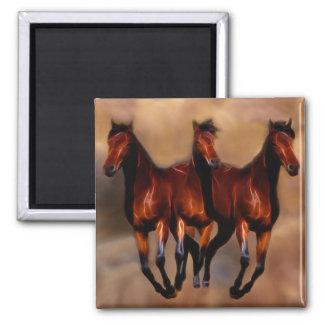 Três cavalos em um ímã quadrado