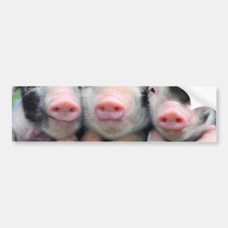 Três porcos pequenos - porco bonito - três porcos adesivo para carro