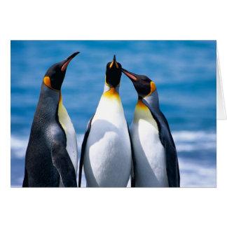 Três rei pinguins - cartão de nota