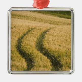 Trilhas dos tratores através do trigo, Toscânia, I Ornamentos Para Arvore De Natal