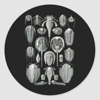 Trilobites e escorpião de mar adesivo