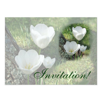 Trio branco da flor das tulipas convite 13.97 x 19.05cm