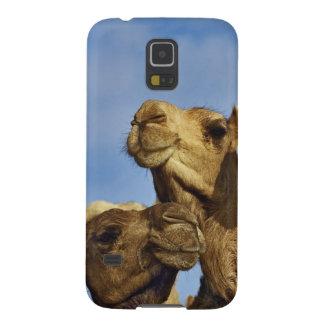 Trio dos camelos, mercado do camelo, o Cairo, Egip Capas Par Galaxy S5