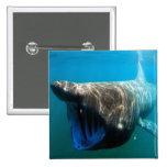 Tubarão Basking Bóton Quadrado 5.08cm