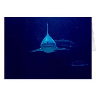 Tubarão Cartão Comemorativo