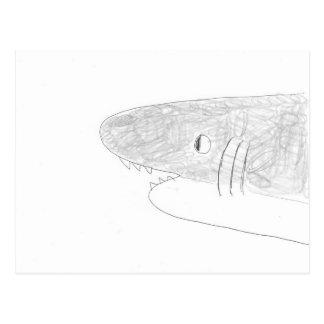 Tubarão Cartão Postal