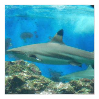 Tubarão com convites do recife